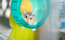 Hamster in cage 2 Stock Image