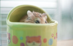 Hamster in cage 3 Stock Images