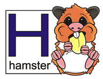 Hamster and a card with the letter H. And the words Hamster royalty free illustration