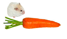 Hamster and carrot Stock Photo