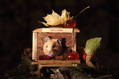 Hamster celebrating Halloween. Royalty Free Stock Photos