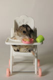 The hamster on the chair. Funny hamster eating on the chair Stock Images