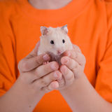 Hamster in the children's hands Royalty Free Stock Photography