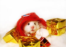Hamster with Christmas gifts. Stock Images