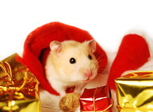 Hamster with Christmas gifts. Royalty Free Stock Photos