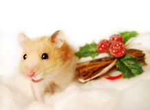 Hamster with Christmas mistletoe. Royalty Free Stock Photo