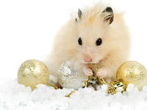 Hamster with christmas toys Stock Photo
