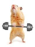 Hamster com barra Fotografia de Stock