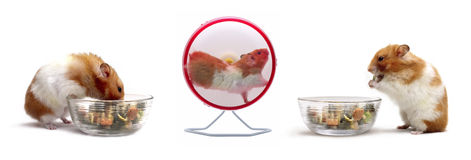 Hamster compilation Stock Images