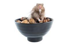Hamster (Cricetus) mit Mischnüssen Lizenzfreies Stockbild