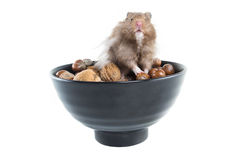 Hamster (Cricetus) with mixed nuts Royalty Free Stock Image