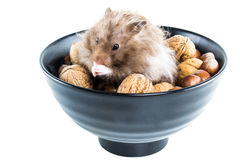 Hamster (Cricetus) with mixed nuts. Male hamster (cricetus) sitting in a bowl with mixed nuts Stock Photo