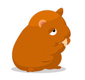 Hamster so cute Royalty Free Stock Photography
