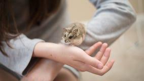 Hamster Cuteness met een kind stock foto