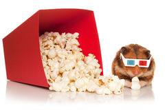 Hamster in 3d glasses chewing popcorn. Stock Photo