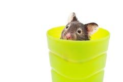 Hamster dans une cuvette Images stock