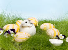 Hamster de Easter Imagens de Stock