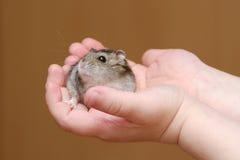 Hamster in den Händen des Kindes Lizenzfreie Stockfotos