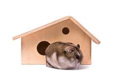 Hamster do anão na casa Fotos de Stock Royalty Free