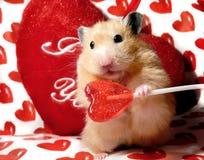Hamster do syrian do dia do Valentim Foto de Stock Royalty Free