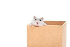 Hamster in Doos Royalty-vrije Stock Foto's