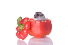 Hamster e pimenta lida Imagens de Stock Royalty Free