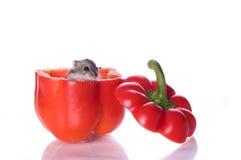 Hamster e pimenta lida Fotografia de Stock Royalty Free