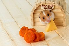 A hamster eats cheese from his house. A hamster eats cheese from his wooden house Stock Photo