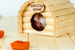 The hamster eats dried apricots. Inside its wooden house Royalty Free Stock Photo