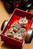Hamster in een aanhangwagenstuk speelgoed Stock Fotografie