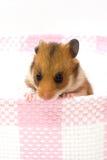Hamster in een mand Stock Afbeelding