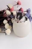 Hamster in einem Ei lizenzfreies stockfoto