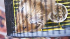 Hamster in einem Käfig lizenzfreie stockfotos