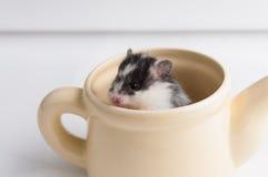 Hamster in einem Topf stockbilder
