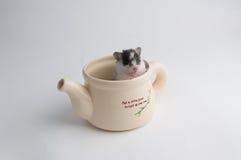 Hamster in einem Topf lizenzfreies stockbild