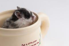 Hamster in einem Topf stockfotografie