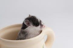 Hamster in einem Topf stockfotos