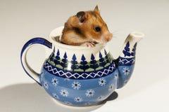 Hamster em um potenciômetro cerâmico para o chá Imagens de Stock