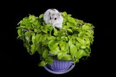 Hamster em uma planta Fotografia de Stock Royalty Free
