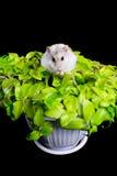 Hamster em uma planta Fotografia de Stock
