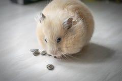 Hamster en zonnebloemzaden royalty-vrije stock foto