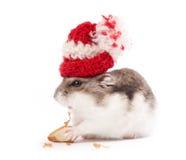 Hamster engraçado Fotos de Stock