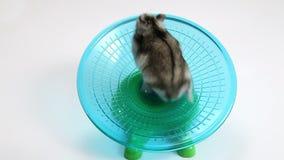 Hamster exercise wheel stock video