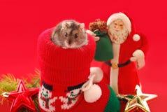 Hamster für Weihnachten Stockfotos