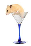 Hamster in glass Stock Images
