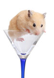 Hamster in glass Royalty Free Stock Photos
