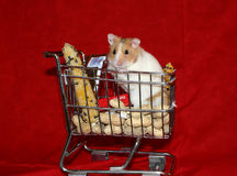 Hamster goes shopping 1. Hamster in shopping basket with favorite foods