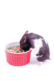 Hamster with grain bowl Stock Images