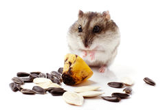Hamster with grain on white Royalty Free Stock Photos
