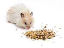 Hamster and grains Stock Photography